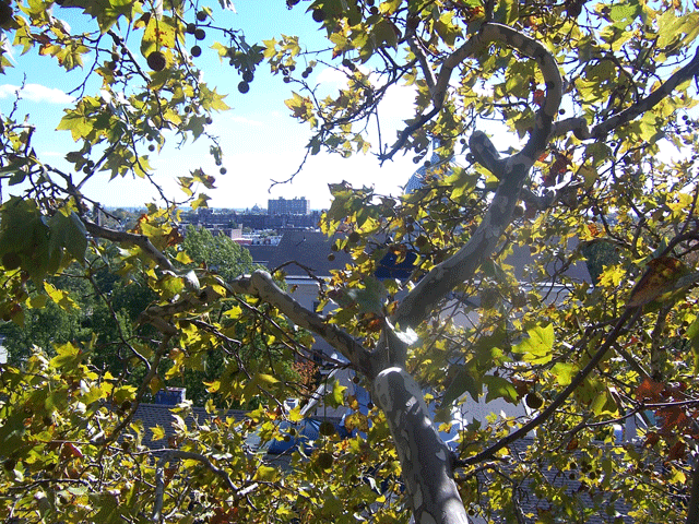 view from tree